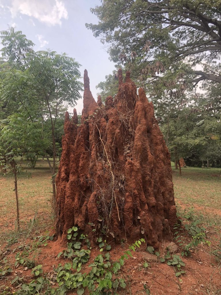 Art Markets And The Botanical Garden In Accra World Capital Confidential